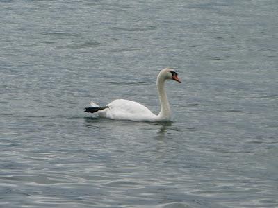 Lacul Leman (Geneva), Lausanne, Elvetia