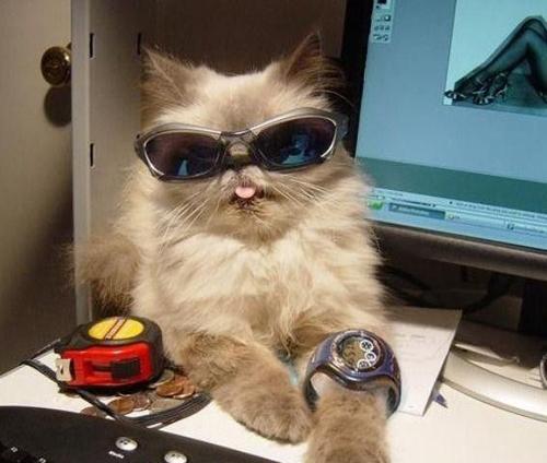 Fotos muy buenas de humor gráfico con gatos
