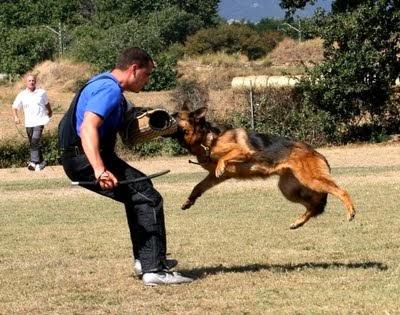Cómo Adiestrar tu mascota - Como adiestrar un perro