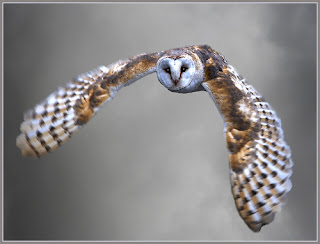 Funny Pictures Gallery: Owls, pictures of owls, owl ...