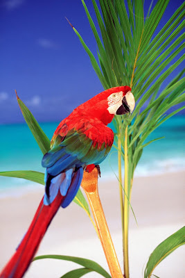 HD Parrot Wallpaper Collection