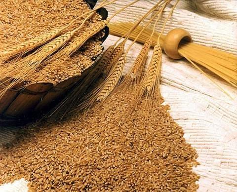 القمح وما أدراك ما القمح