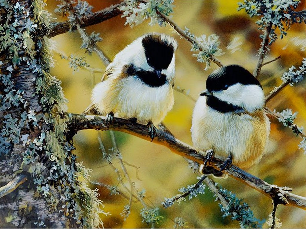 imagenes-de-aves-pintadas-oleo