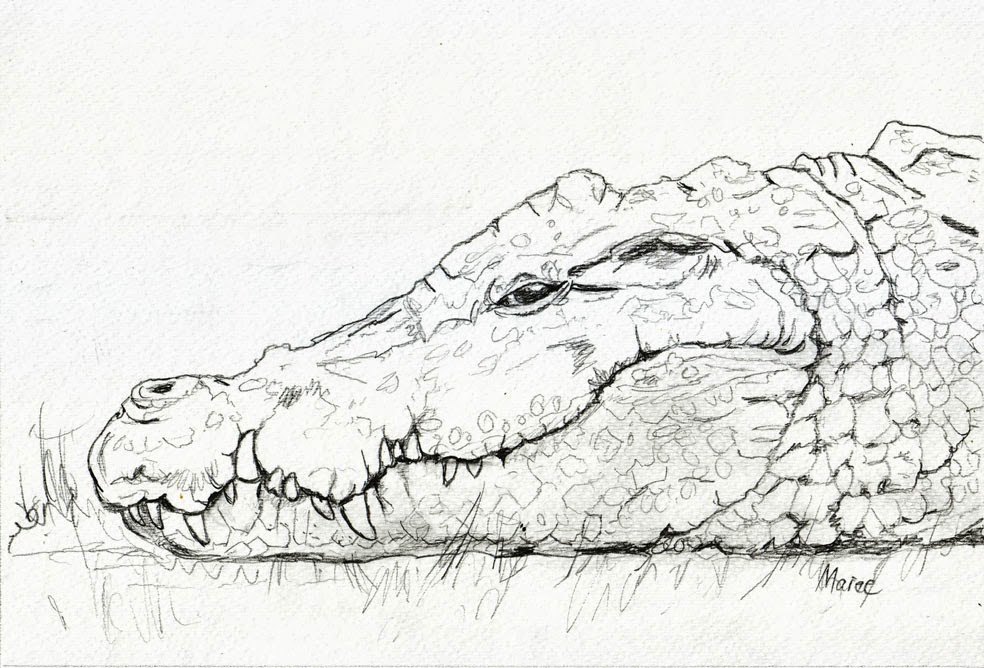 alligator head in water drawing