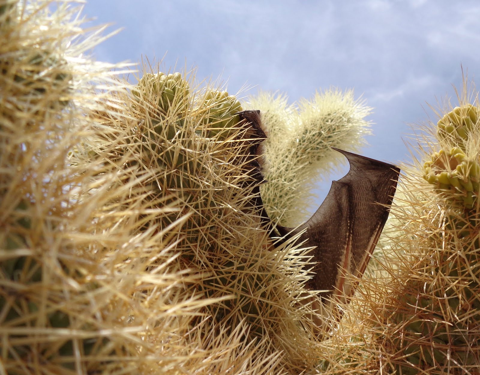 Mojave Desert Scenes