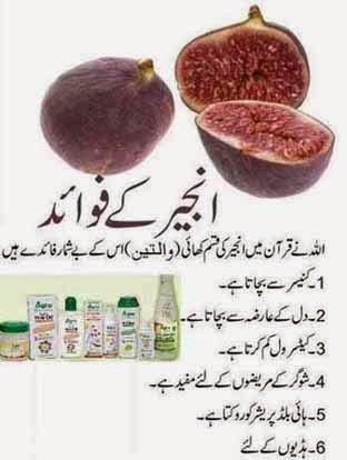 what is meaning of viagra in urdu