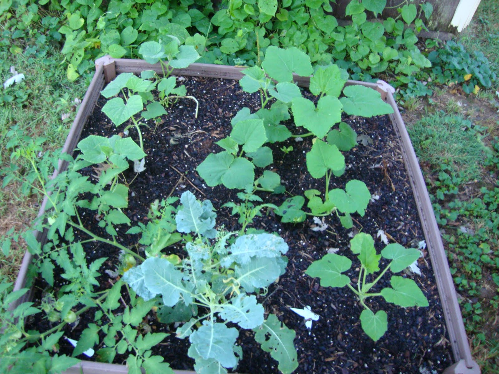 Start From Scratch Garden Life Link Up