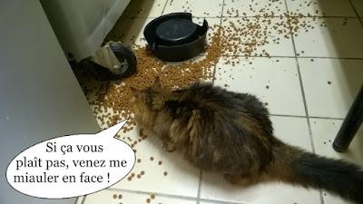 Gamelle de croquettes renversée et chatte à poils longs.