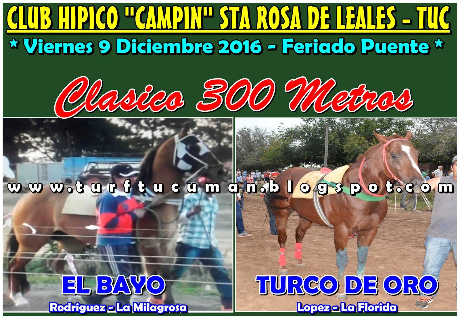 BAYO VS TURCO DE ORO