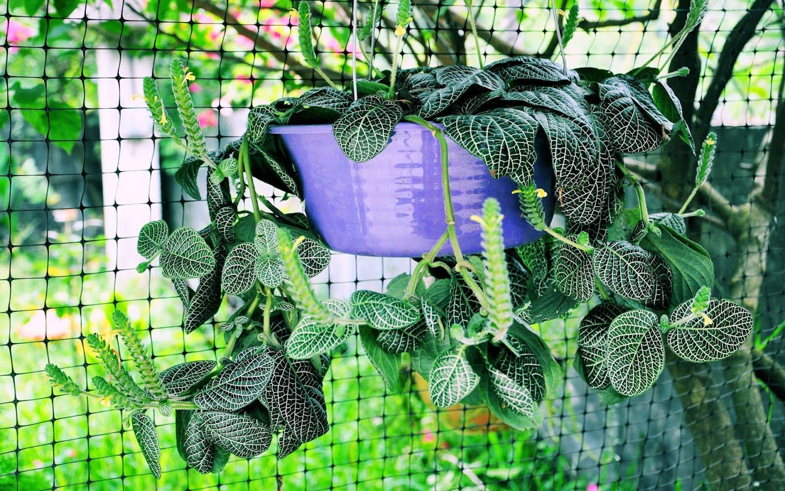 Banco de im genes fondos gratis de plantas y flores - Plantas tropicales para jardin ...