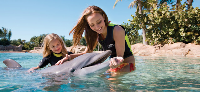 touching dolphins