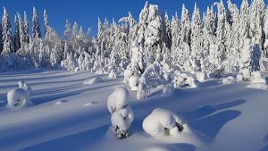 Luminen Jämsä