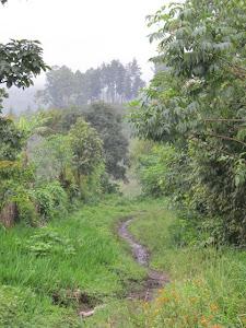Yalijux Trail