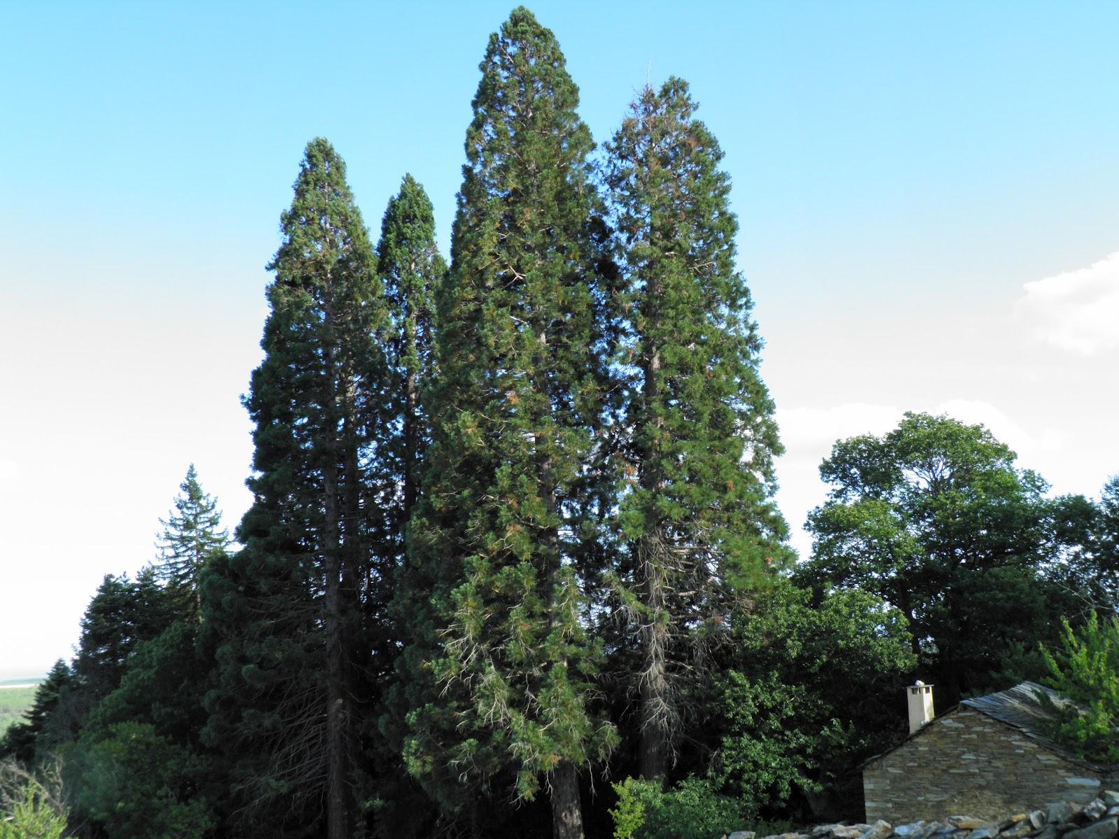 Resultado de imagen de jardin el fenal
