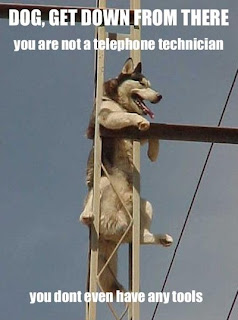 dog get down from there you dont even have tools