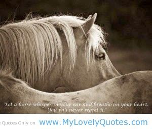 Wallpaper Desk : Horse Quotes & Cowgirl Quotes Wallpaper Desk