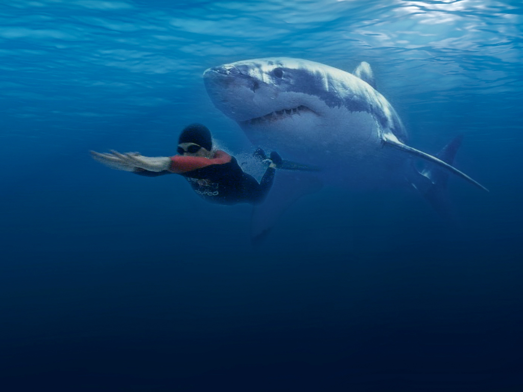 the background of the great white shark and how it attacks its prey Great white shark attacks: a great white uses its teeth the way but they bite a lot of things that don't resemble any of their known prey, said a.