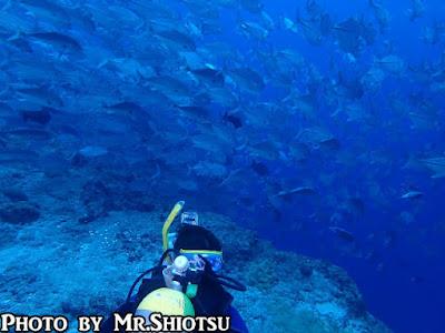 パラオ ダイビング ブルーコーナー ギンガメアジ 群れ