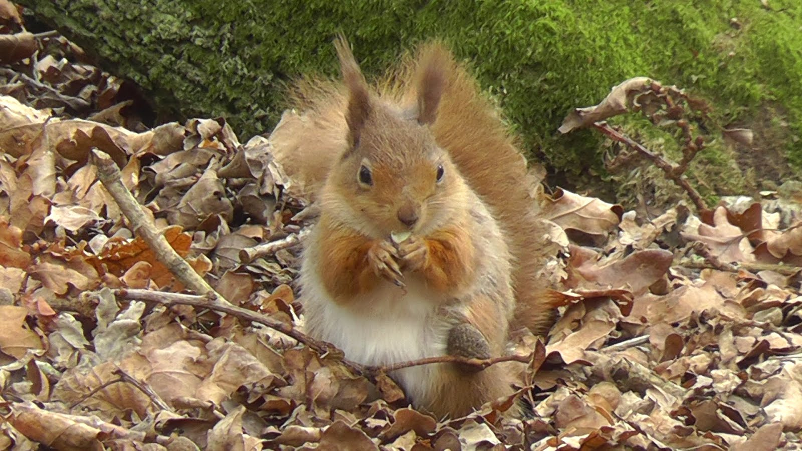 squirrel single personals Find squirrel nut zippers discography, albums and singles on allmusic.