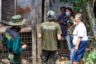 The orangutan rescue team plan their rescue strategy