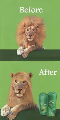 Antes - Después