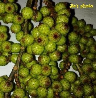 buah manau adalah buah dari pohon rotan dimana buahnya memiliki