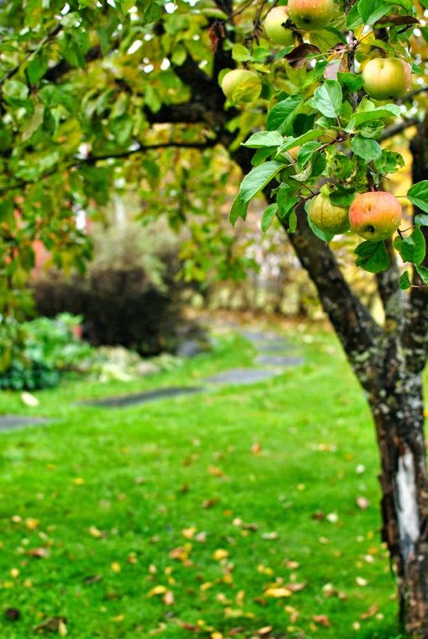 höst trädgård äppelträd