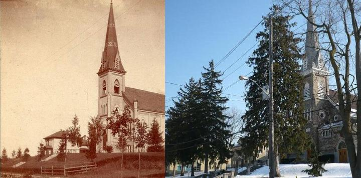 Norway spruce trees, St. Louis Church, c. 1900 & 2013
