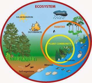 https://dl.dropboxusercontent.com/u/58184609/Interaction%20in%20Ecosystems.swf