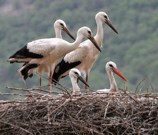 stork eggs crow eggs