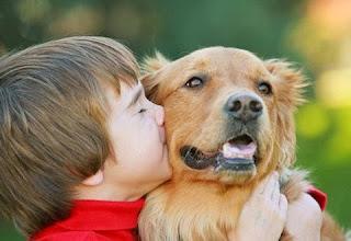 Rất nhiều nguyên nhân dẫn đến dị ứng trên chó.