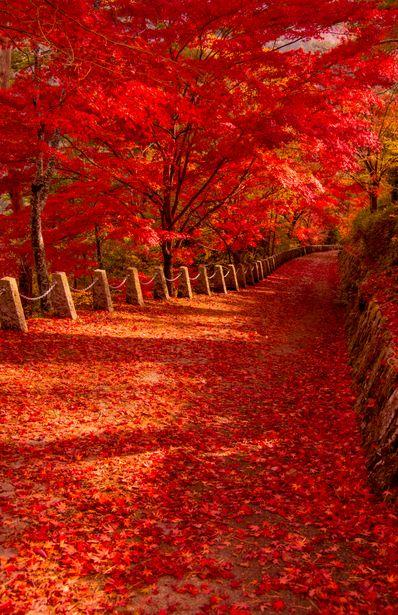 foglie-rosse-autunno