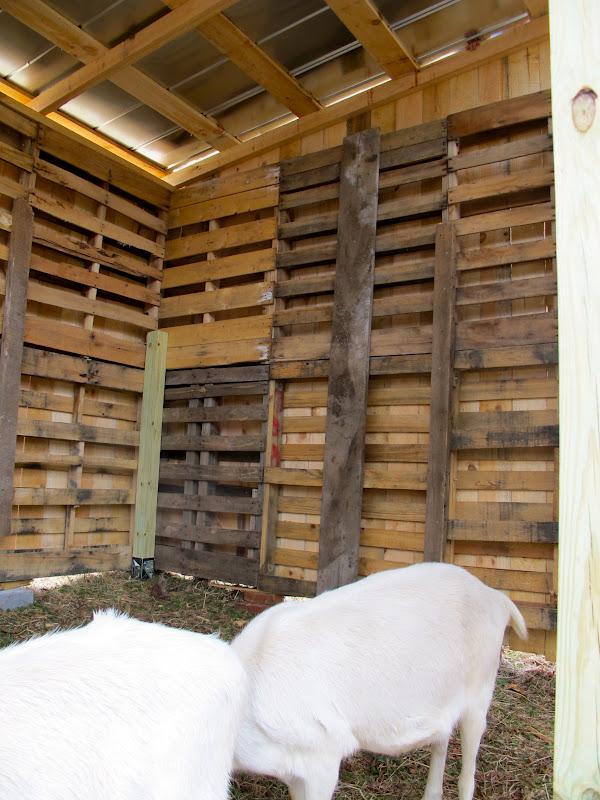 It S A Boy S Life The Goat S Pallet Barn