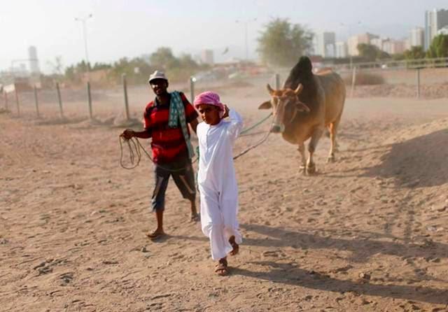 Bullfighting in United Arab Emirates