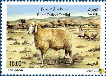 Le mouton Ouled djellal