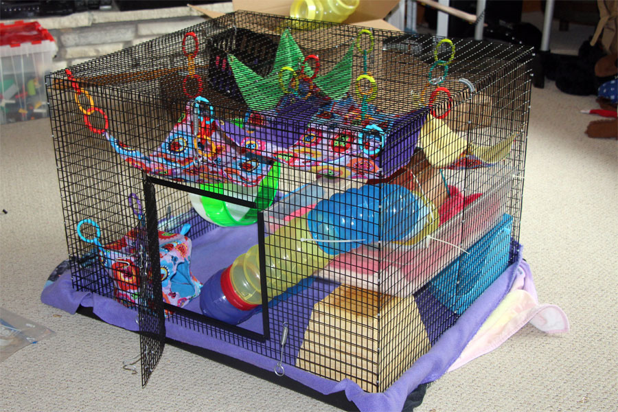 Rat Cage Toys