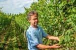 Weingut Feuerstein, Heitersheim/ Markgräflerland, 5 Weißweine, 1 Rotwein