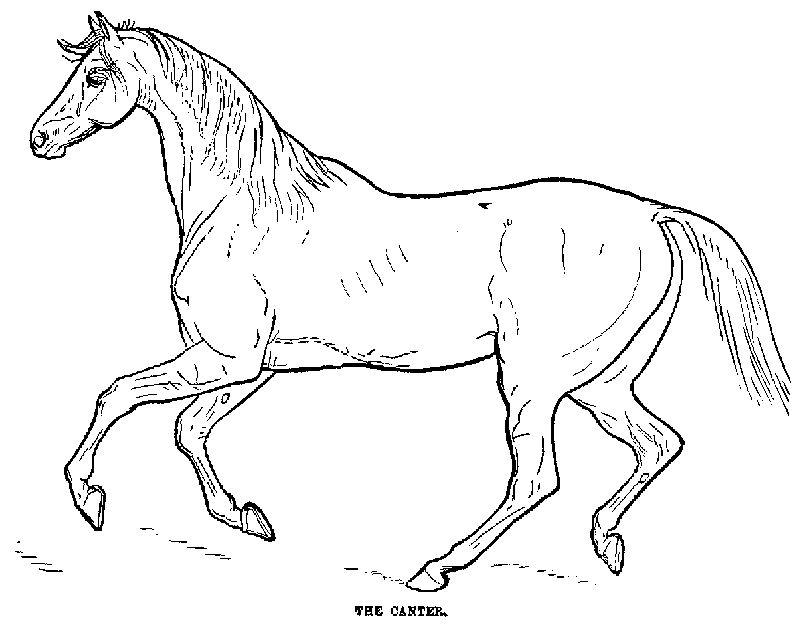 Desenhos_colorir_cavalo Colorir Pintar Desenho Figura Gravura Imagem