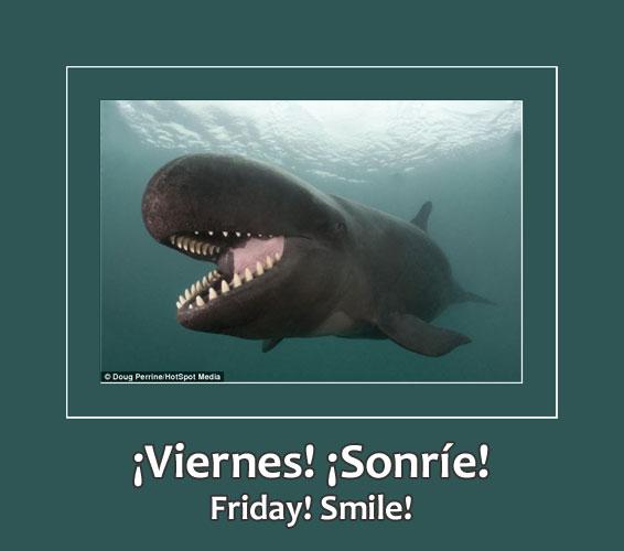 smiling false killer whale