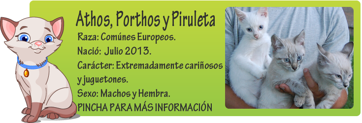http://mirada-animal-toledo.blogspot.com.es/2013/09/athos-porthos-y-piruleta-tirados-un.html