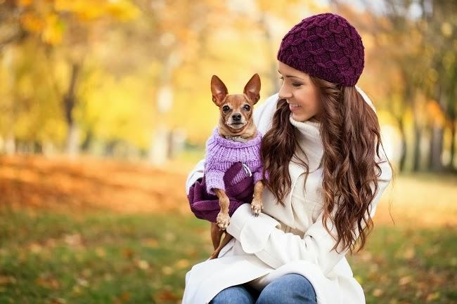 Jak przekonać do siebie bojaźliwego psa