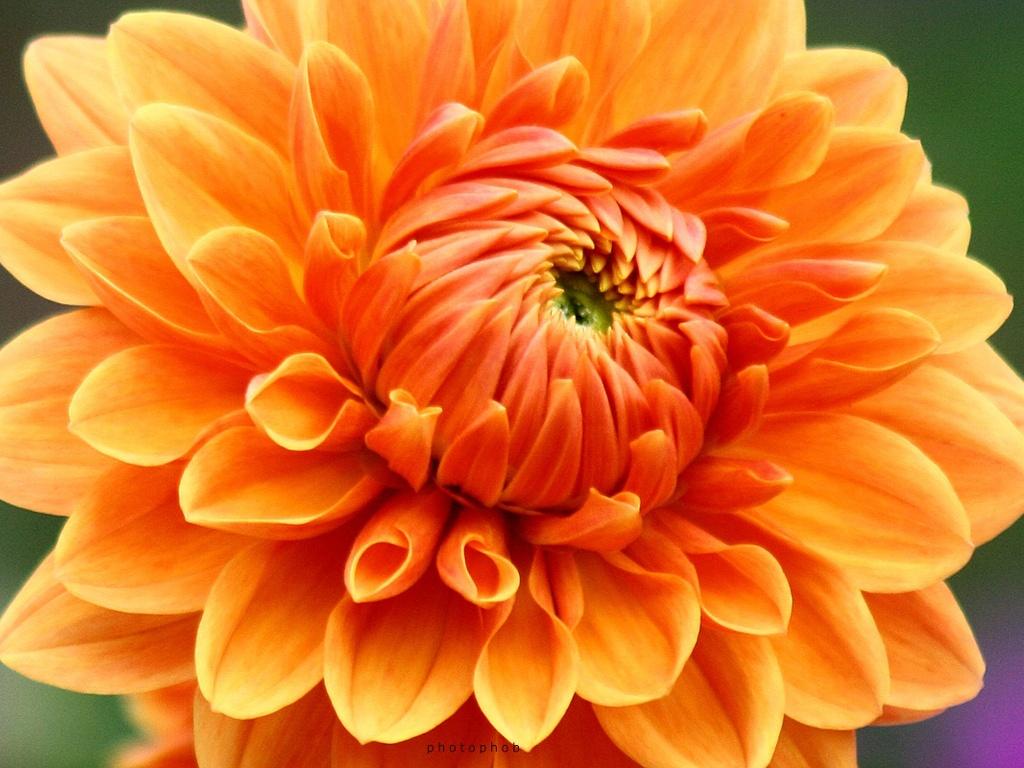 Image Gallery November Flower