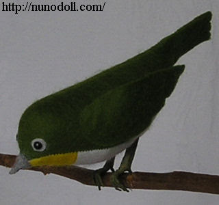 White-eye on a twig