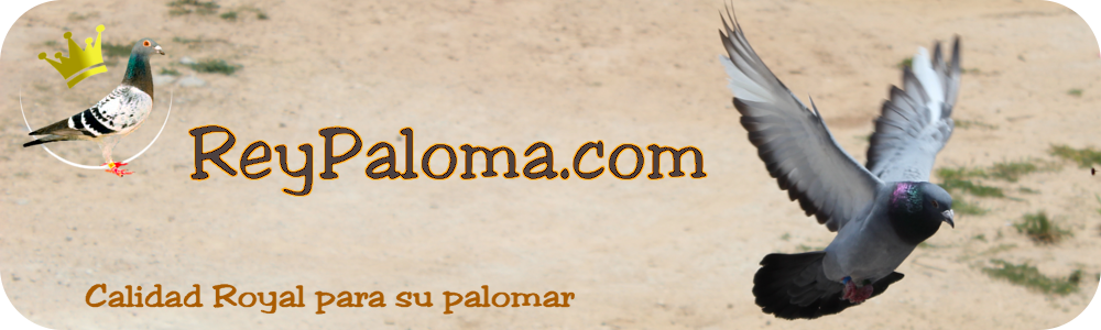 ReyPaloma