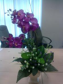 Orkid Purple