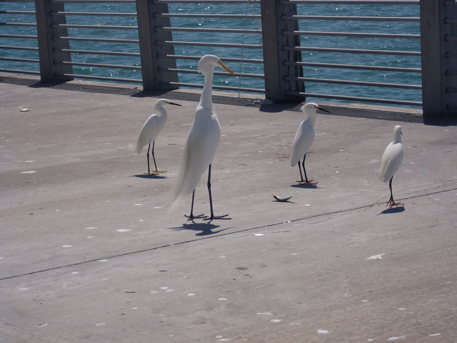 Teri 39 s world beaches and bridges for Do you need a fishing license on a pier