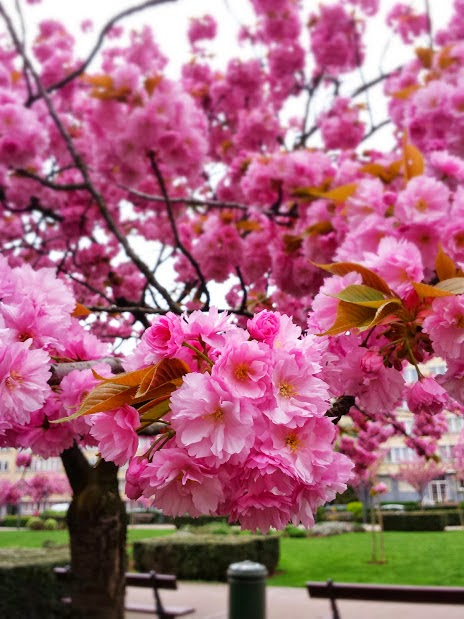 Brussels Spring