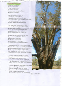 Ode to a Red River Gum
