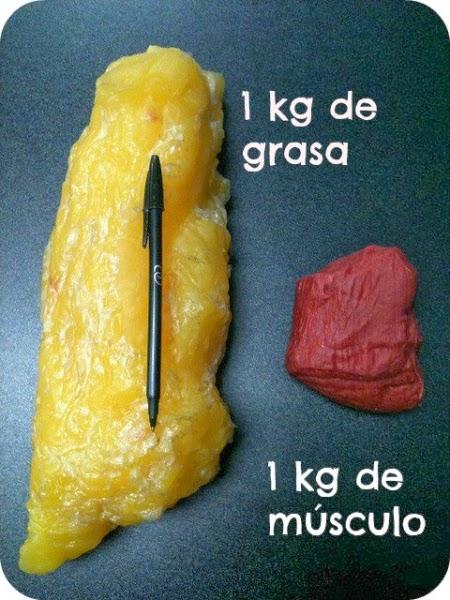 Densidades de la grasa y músculo