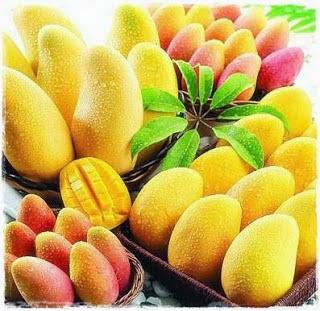 1001 Manfaat disebalik kesegaran buah mangga